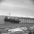 Jack Anderson's power barge, Lois Anderson, at Homer Spit Dock, April 3, 1948 (Photographer, Steve McCutcheon).