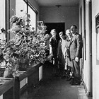 "The ""Hallway Geranium Garden"" above the First National Bank of Anchorage (individuals not identified)."