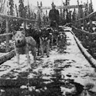 Carl Lottsfeldt mushing with dog team, Ophir to Takotna, Alaska, ca. 1925.
